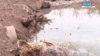 В реке Малая Була массово гибнет рыба.
